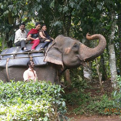 Home - Mystikal Holidays-Kerala Holidays, Kerala Tour, Tour